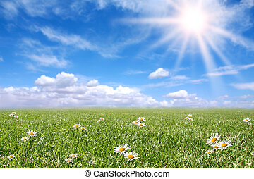 sereen, zonnig, akker, weide, in, lente