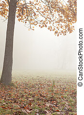 Serene autumn landscape - a tree and fog, nature