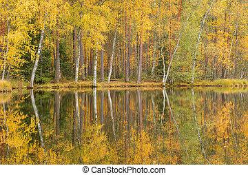 Serene autumn landscape at forest lake