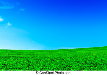 Serene green landscape - Bright green field on a sunny day