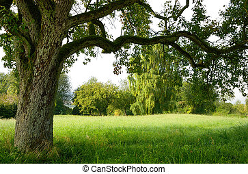 Serene landscape bordered by a tree - Beautiful meadow with...