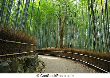 Serene path along a dense bamboo grove, symbolizing environment and pollution, journey, and conservation of the earth. Also suitable for concepts such as zen and religion, and the Japanese culture. Taken in Kyoto, Japan.
