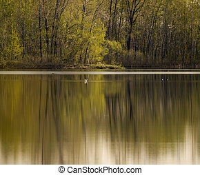 serene scene in forest with some bird on the lake. Focus on the little bird