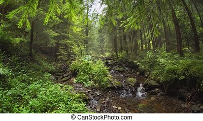 Serene Stream in Carpathian Mountains with Sound - Tranquil ...