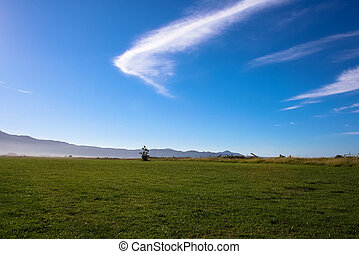 Serene Sunny Field