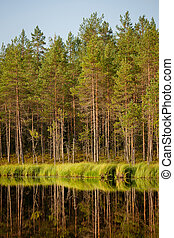 Serene sunny morning forest reflection