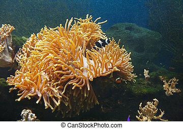 Serene underwater world of coral reef in tropical sea.