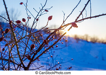 serene winter landscape with briar at sunset