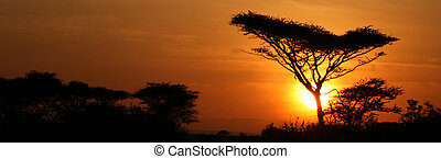 serengeti, árvore acacia, pôr do sol, áfrica