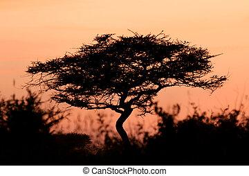 serengeti, アカシアの木, 日没, アフリカ