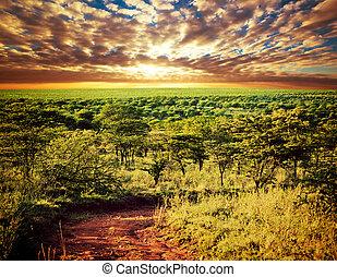 serengeti, サバンナ, 風景, 中に, タンザニア, アフリカ。