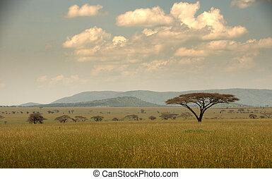 Serengeti Landscape with acacia tree