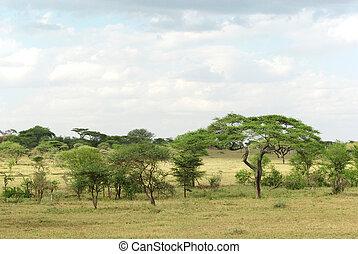 serengeti, landschaftsbild, typisch