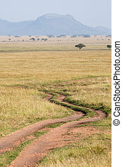 Serengeti road - A gravel two track road in the Serengeti...