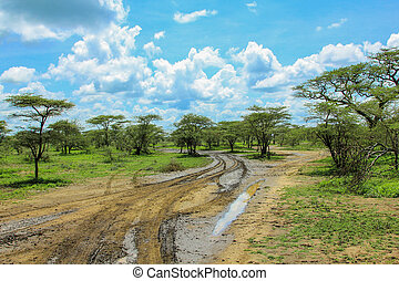 Serengeti roads