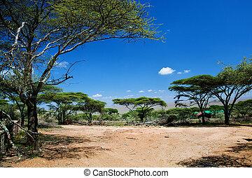 serengeti, sabana, áfrica, tanzania, paisaje