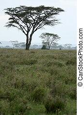 Serengeti Safari, Tanzania, Africa