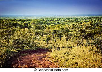 Serengeti savanna landscape in Tanzania, Africa.