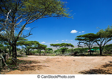 serengeti, sawanna, afryka, tanzania, krajobraz