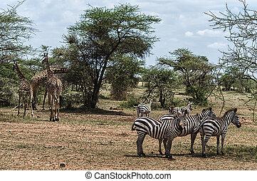 Serengeti Scene