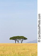 Serengeti trees - Three thorn trees growing right next to ...