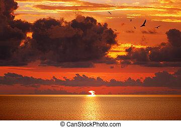 sereno, acima, glowing, pôr do sol, mar, vermelho