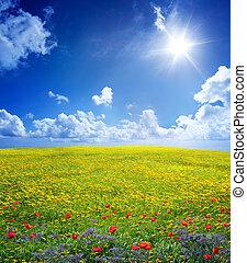 sereno, campo, amarillo, escena