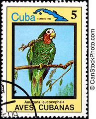 seria, Kubanka, Ptaszki,  amazona,  leucocephala