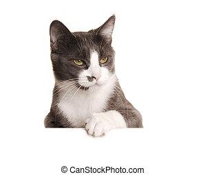 serie, gato, gris