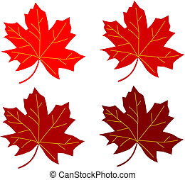 series maple leaf red