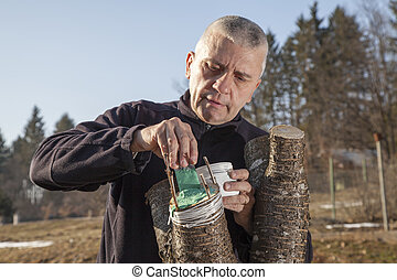 Mid aged man grafting fruit tree - SERIES OF PHOTOS Mid aged...