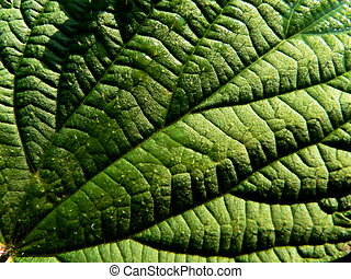Leaf of the nettle 2