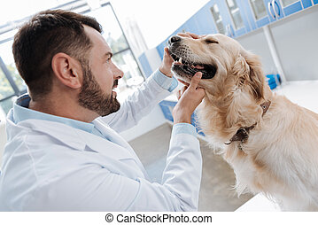 Serious dog listening to the doctor