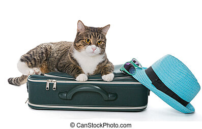 Serious grey cat sitting on a green suitcase