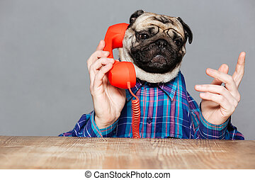 Serious man with pug dog head talking on telephone