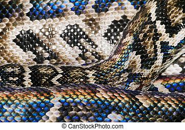serpent, peau