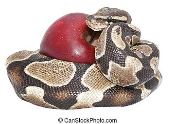 serpiente, manzana