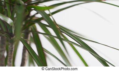 serre, main, soutenable, prendre, fin, écologie, concept., ...