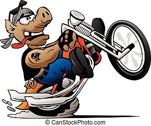sertés, ábra, wheelie, bringás, vektor, motorkerékpár, karikatúra, durrantó