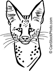 Serval - face of an african serval wildcat