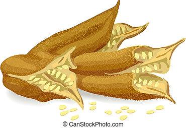 Sesame pods. Vector illustration.