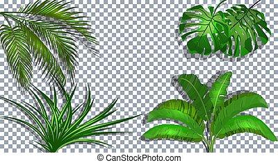 set., 椰子, 插圖, monstera, 熱帶, 綠色, ogawa., 背景, 離開, 香蕉, shadow., 透明