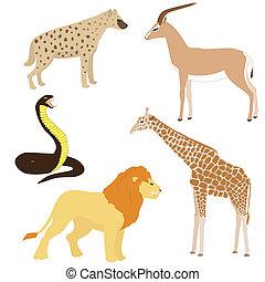 set, 2, di, cartone animato, africano, animali