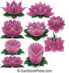 set, 3, lotus, gekleurde