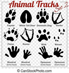 set, animali, piste, vettore, -
