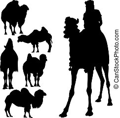 set animals camels rider