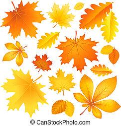 Set autumn leaves - Vector illustration a set of beautiful...