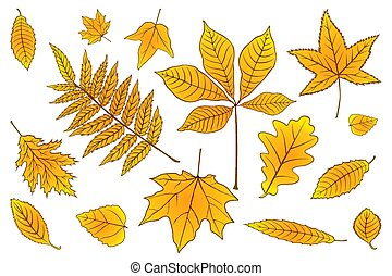 set Autumn leaves of orange on white. Vector illustration. EPS 10.