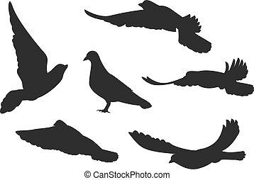 Set bird pigeon flies. Black silhouettes. Isolated