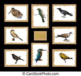 Set birds postage stamps